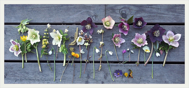 Image of various flowers laid on wooden boards.