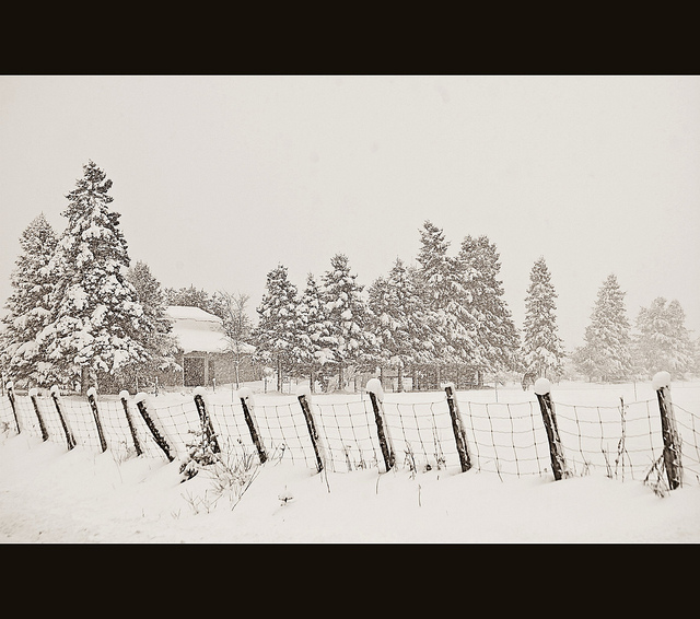 Image of snowy field, with a fence in the foreground and evergreen trees and a small building in the background.